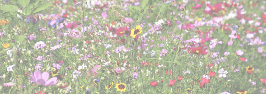 A photo of a summer time field of wildflowers.