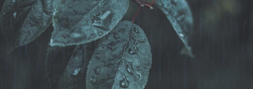 As rain falls, raindrops form on dark green leaves. Photo by Dark Journey on Pexels.