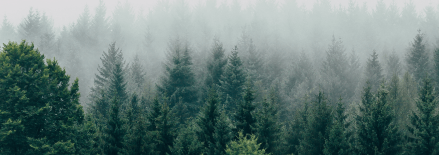 A photo of heavy mist falling on the lush green trees of a forest.
