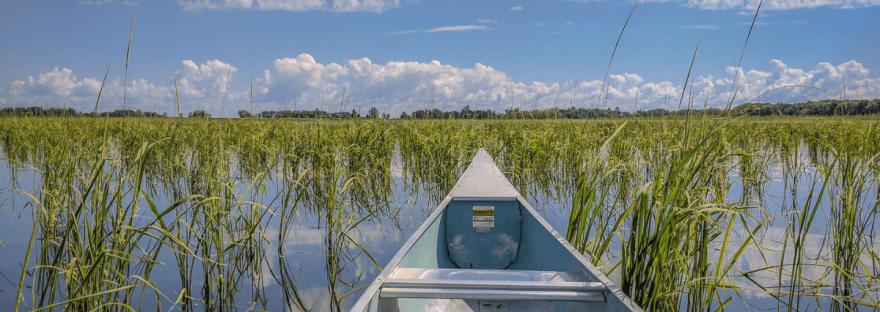 A canoe floats through a Minnesota wild rice lake on a sunny day. Photo by Brett Whaley.