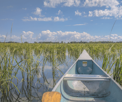 A photo by Brett Whaley of a canoe floating through a Minnesota wild rice lake on a sunny day.
